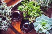 Pokojové rostliny a láhve