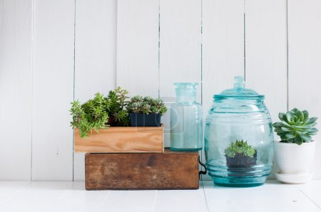 Foto de Vintage home decor: houseplants, green succulents, old wooden boxes and vintage blue glass bottles on white wooden board, cozy home interior. - Imagen libre de derechos