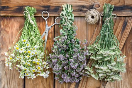 Photo for Freshly harvested herbs hanging and drying - Royalty Free Image