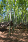 Bamboo forest and wooden pavilions