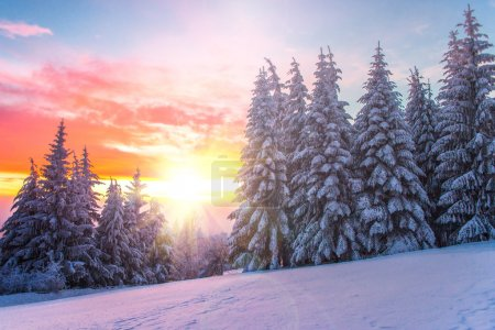 Photo for Winter landscape on a sunset. Bulgaria - Royalty Free Image