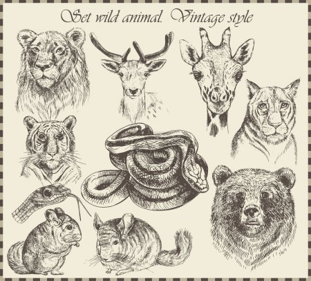 Illustration for Vector set: different wild animals - various vintage style. - Royalty Free Image