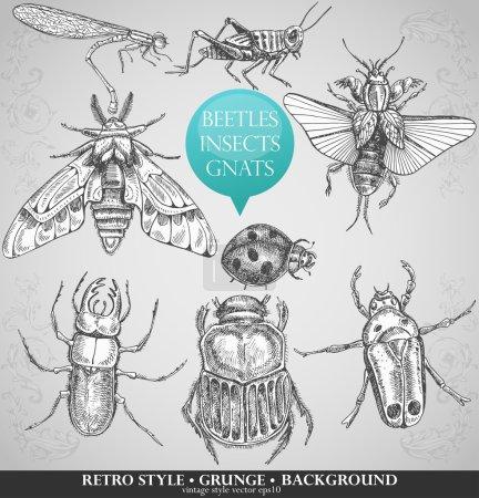 Illustration pour Ensemble vectoriel insectes dans un style vintage - image libre de droit