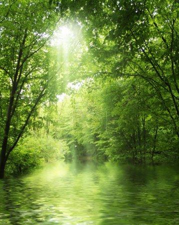 Photo pour Rayon de soleil dans la forêt verte avec de l'eau - image libre de droit