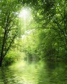sunbeam in green forest with water