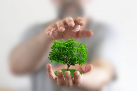 Photo for Hands holding a small tree - Royalty Free Image