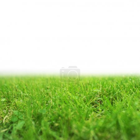 Photo for Fresh green grass - Royalty Free Image