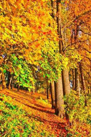 Beautiful colorful autumn park in sunny day, perspective vanishi