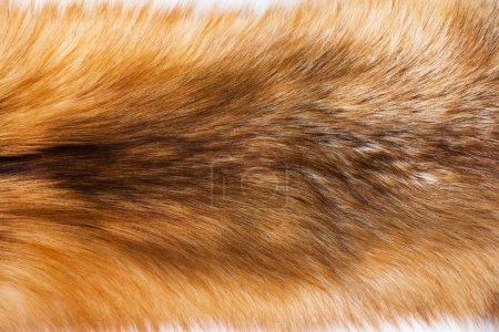 Photo pour Portrait de peau de renard fureur sur le plancher - image libre de droit