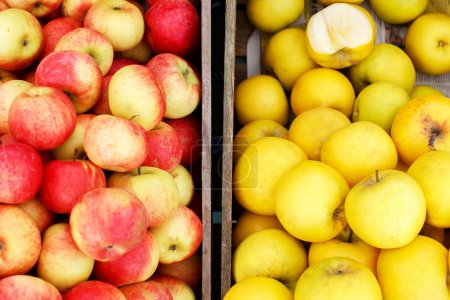 Red and yellow apples in wooden crates