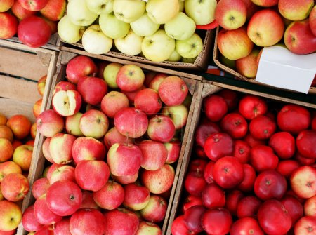 A lot of crates with colorful apples