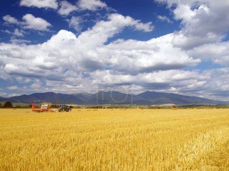 Wheat harvest in Slovakia