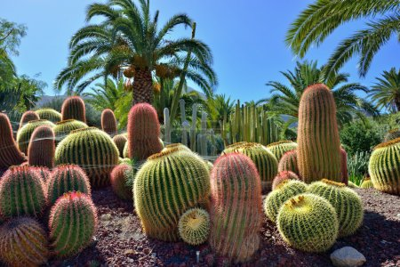 Photo for Beautiful tropical cactus garden,  Gran Canaria. Spain - Royalty Free Image