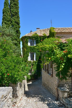Photo for Typical street witg house covered a green wild grapes in beautiful medieval village of Seguret - Royalty Free Image