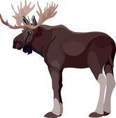 Elk color
