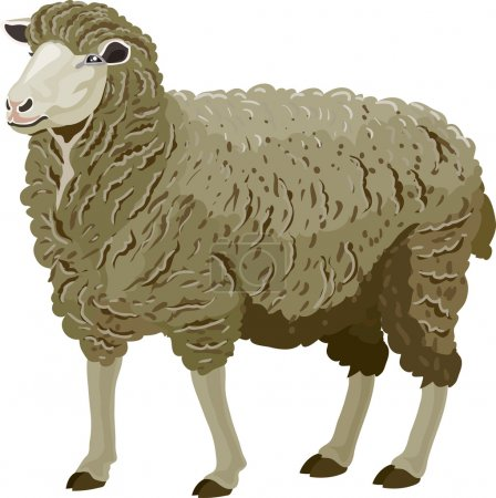 Illustration for Sheep made in the technique of vector - Royalty Free Image