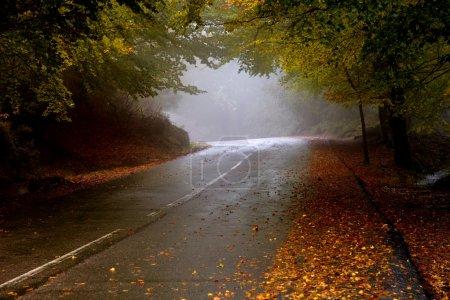 Photo pour Route forestière dans un jour de brouillard dans le parc national portugais - image libre de droit