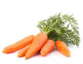 Mrkev zelenina s listy