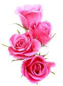 """Постер, картина, фотообои """"Розовый цветок розы букет"""""""