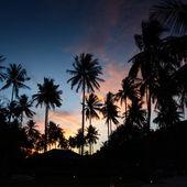 Palms at sunset at thailand resort