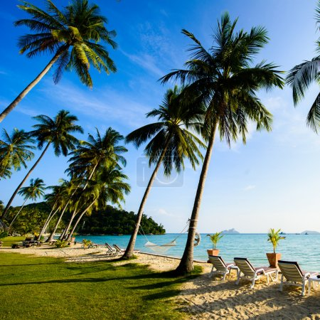 Photo for Beach with palms on thailand island - Royalty Free Image