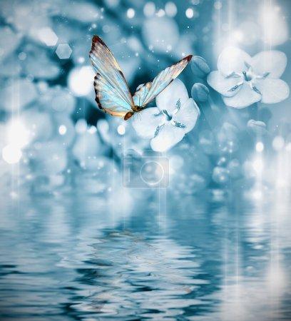 Photo pour Papillon sur fond bleu foncé - image libre de droit