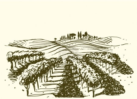 Vineyard. Wine & Grape illustration.