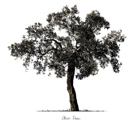 Olive Tree silhouette.