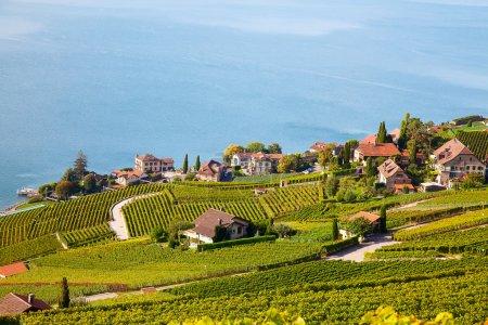 Photo pour Vignobles de la région de Lavaux sur le lac Léman (lac de Genève) - image libre de droit