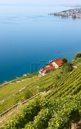 Vineyards of the Lavaux region