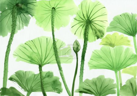 Photo for Original art, watercolor painting of green lotus leaves, Asian style painting - Royalty Free Image