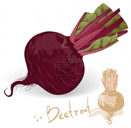 Fresh and sweet beetroot.