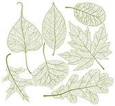 Leaf skeletons vector set