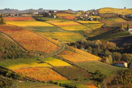 Vineyards on the hills in autumn in Piedmont, Italy.