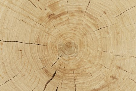 fresh cut log