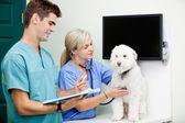 Médecins vétérinaire examinant un chien à la clinique