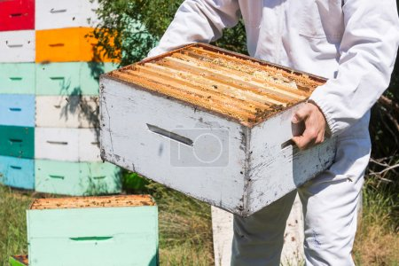 Midsection Of Beekeeper Carrying Honeycomb Box