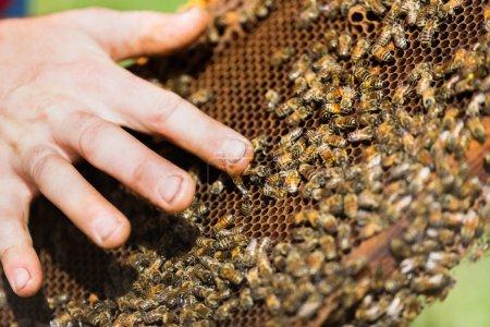 Beekeeper's Hand with Honey