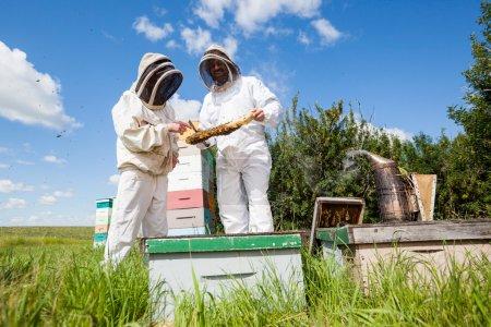 Beekeepers Examining Honeycomb At Apiary