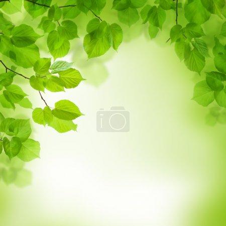 Photo pour Feuilles vertes bordure, fond abstrait - image libre de droit