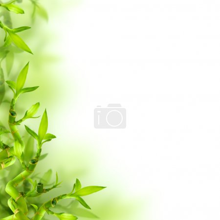 Photo for Bamboo and green leaves, background - Royalty Free Image