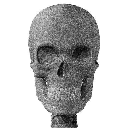 Photo pour Abstraites crayonné crâne humain. illustration numérique sur fond blanc. - image libre de droit