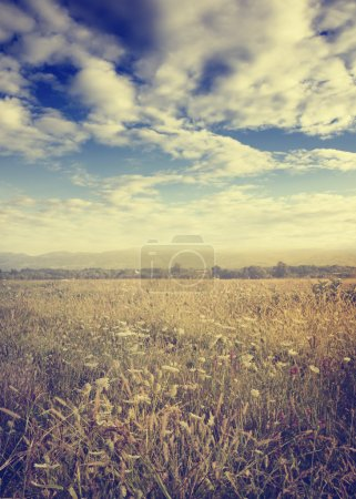 Photo for Beautiful meadow in late summer - Royalty Free Image