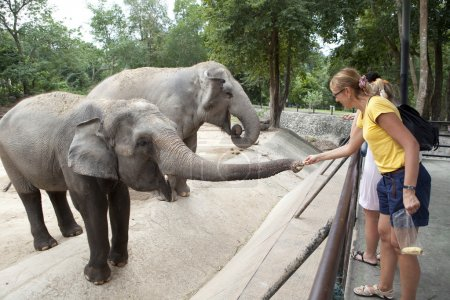 Woman feeding the elephant