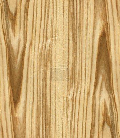 texture du frêne