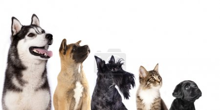 Group of dogs and kitten