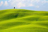 Beautiful Spring Tuscany landscape