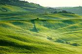 Countryside, San Quirico Orcia , Tuscany, Italy