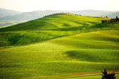 Countryside, San Quirico d'Orcia , Tuscany, Italy