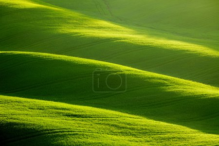 Photo for Rolling green hills - Royalty Free Image